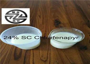 Agricultural Chlorfenapyr 24 SC Low Toxicity Long Effective Period